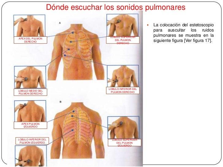2. Anatomia superfical del torax