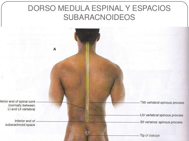 2. Anatomia superfical del torax