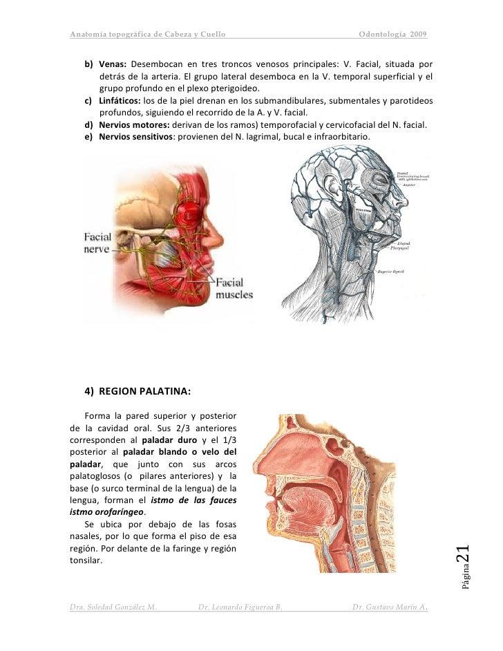 Famoso Cabeza De La Columna Vertebral Del Cuello Anatomía Festooning ...