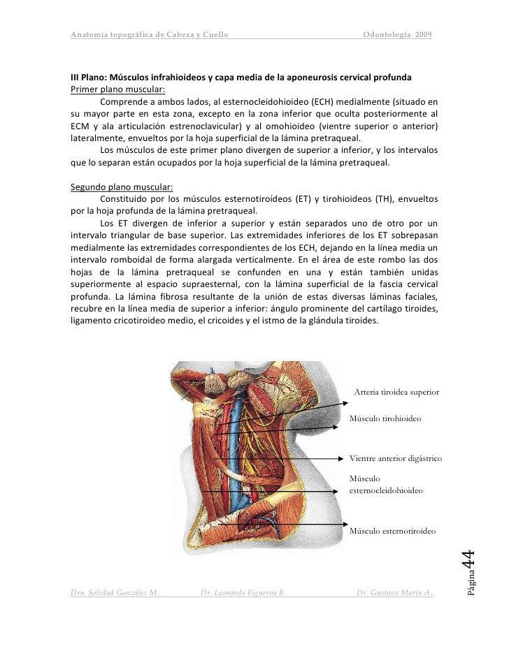 Netter anatomia cabeza cuello pdf : Selection Test Mending Wall And ...