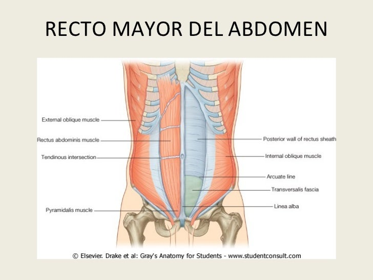 Anatomia Topografica Abdomen Klgo. Andres Riveros