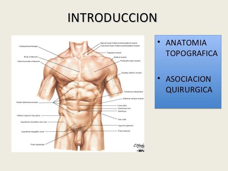 Único Anatomía Topográfica Del Abdomen Componente - Anatomía de Las ...
