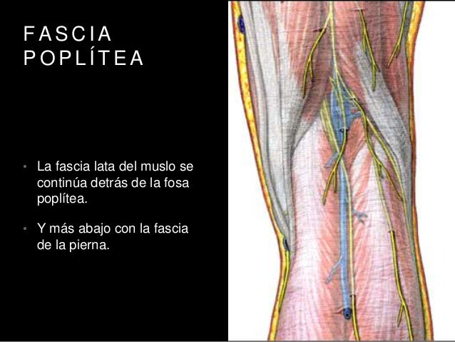 Anatomia topográfica de rodilla