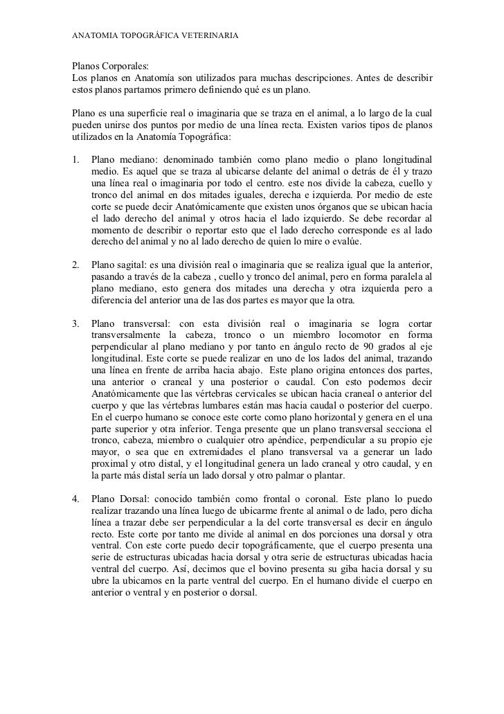 Excelente Dibujo Para Colorear De Anatomía Veterinaria De Saunders ...