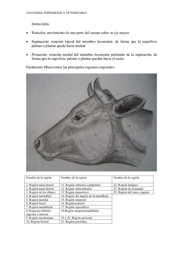 Anatomia topografica veterinaria