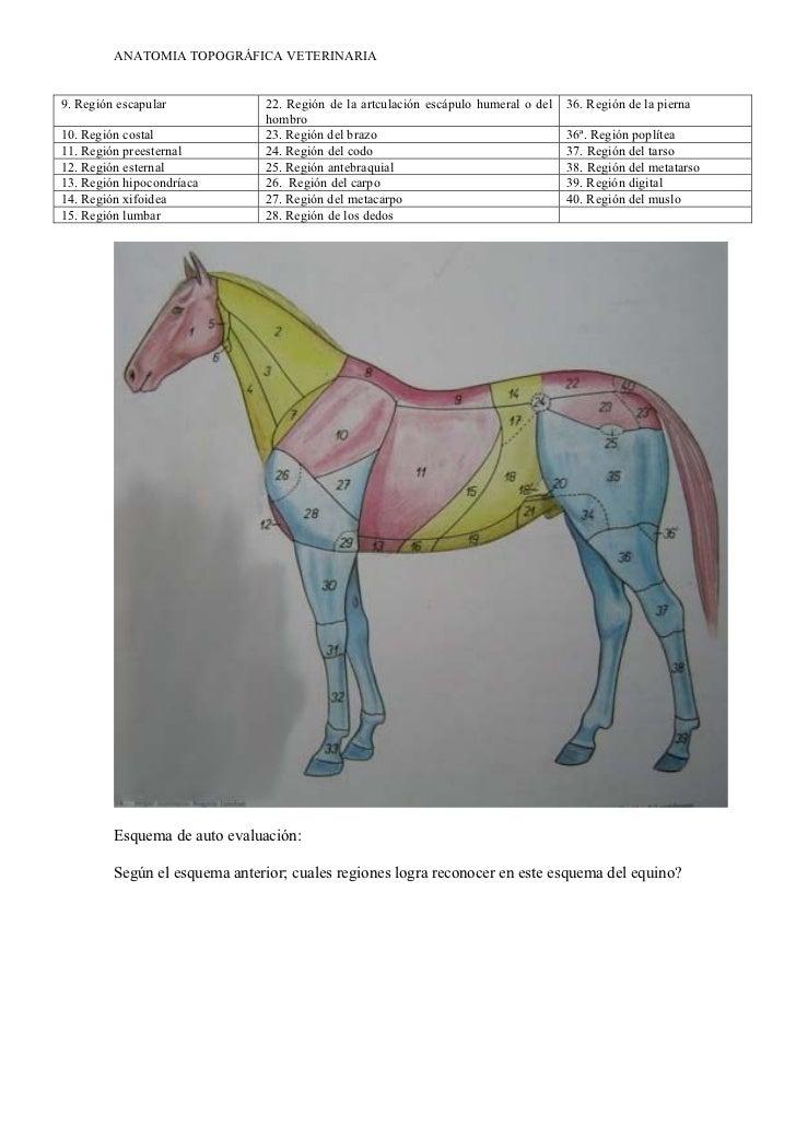 anatomia-topografica-veterinaria-9-728.jpg?cb=1346267490