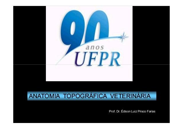 ANATOMIA TOPOGRÁFICA VETERINÁRIA                     Prof. Dr. Édison Luiz Prisco Farias