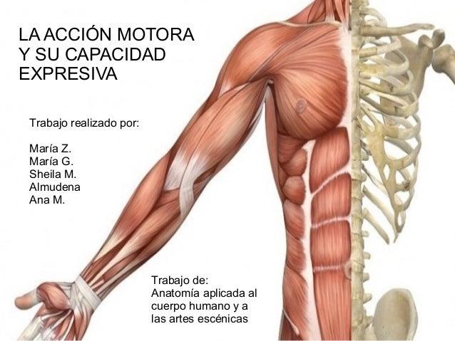 Anatomía trabajo