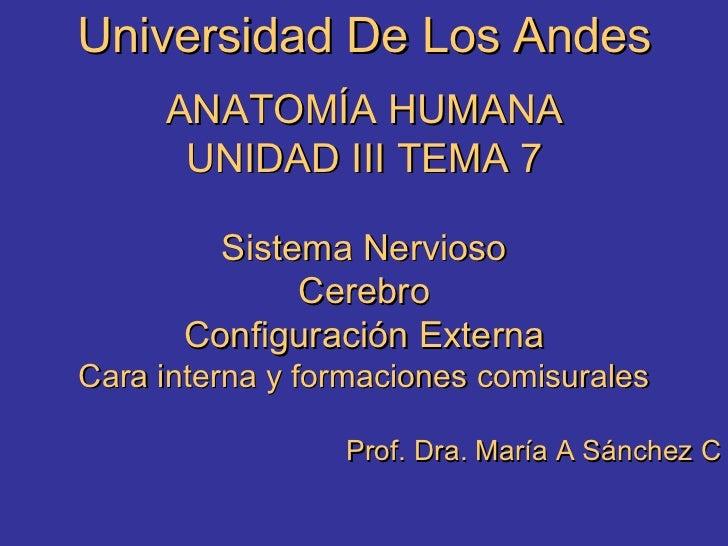 Universidad De Los Andes ANATOMÍA HUMANA UNIDAD III TEMA 7 Sistema Nervioso Cerebro Configuración Externa Cara interna y f...