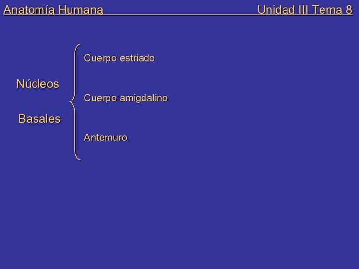 Anatomia und iii tema 8