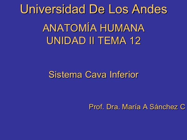 Universidad De Los Andes ANATOMÍA HUMANA UNIDAD II TEMA 12 Sistema Cava Inferior Prof. Dra. María A Sánchez C