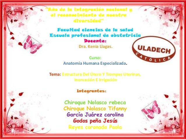 Anatomia utero y trompas uetrinas