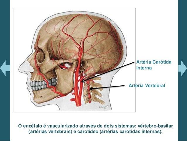 Anatomia Vasculariza 231 227 O Arterial Encef 225 Lica E Avc