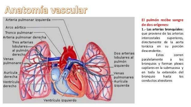 Anatomia vascular y linfatica del pulmon