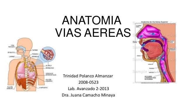 Anatomia vias aereas lab avanzado