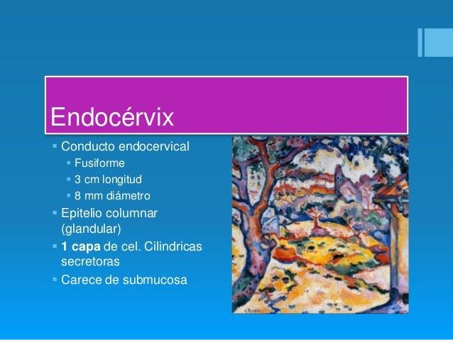 Anatomia del cervix