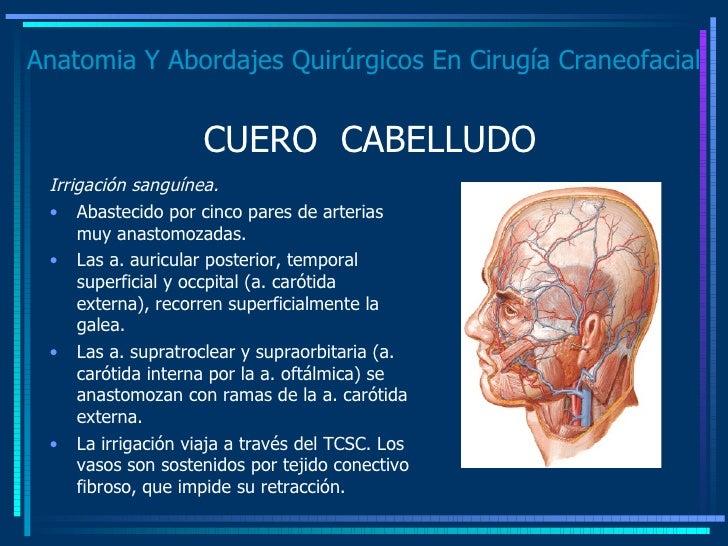 Anatomia Y Abordajes Quirúrgicos En Cirugía Craneofacial