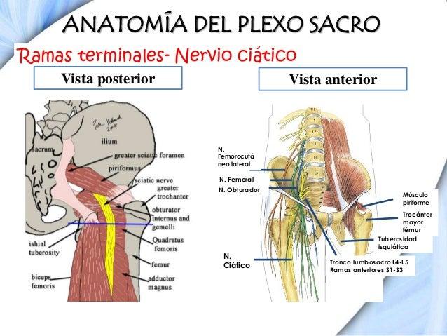 Anatomía y bloqueos de miembro inferior