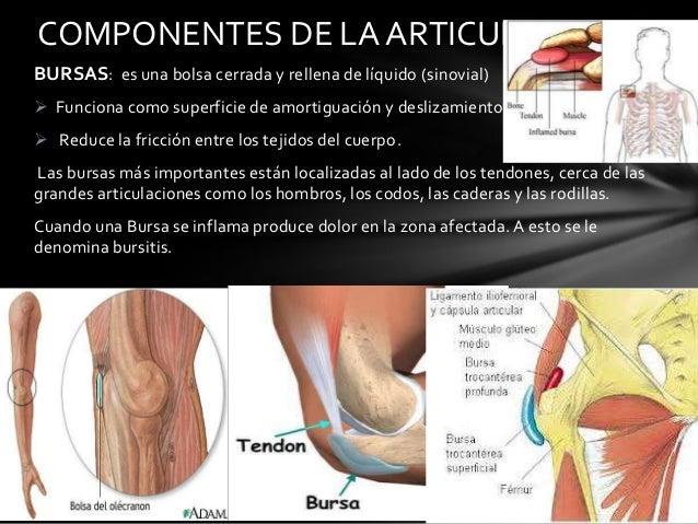 Anatomia y clasificacion de las articulaciones