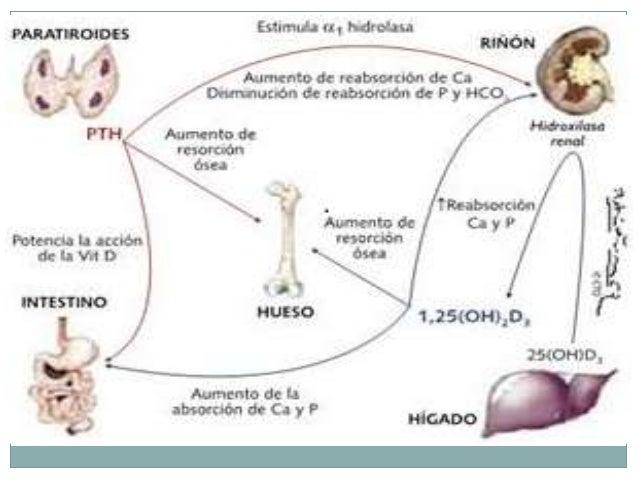 Anatomia y embriologia de paratiroides