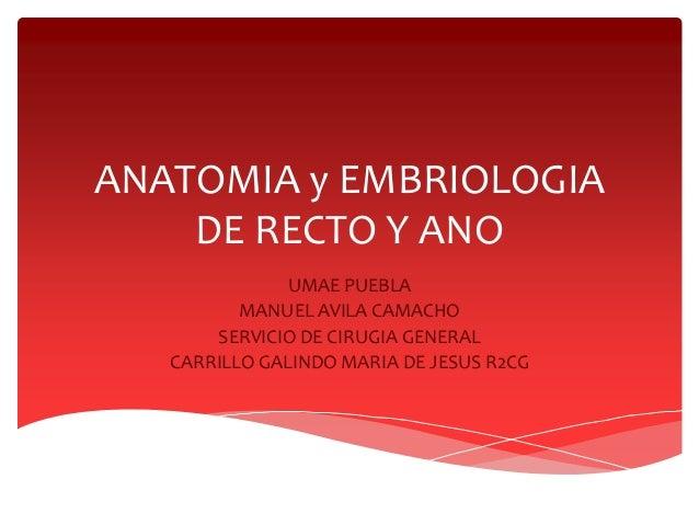 ANATOMIA y EMBRIOLOGIA DE RECTO Y ANO UMAE PUEBLA MANUEL AVILA CAMACHO SERVICIO DE CIRUGIA GENERAL CARRILLO GALINDO MARIA ...