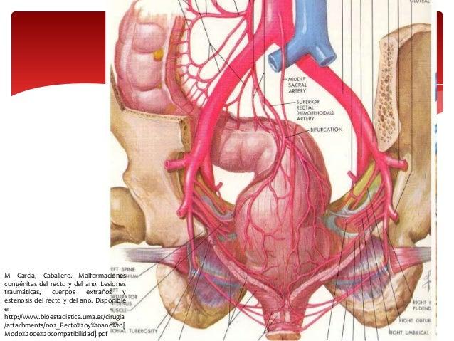 Anatomia y embriologia de recto y ano