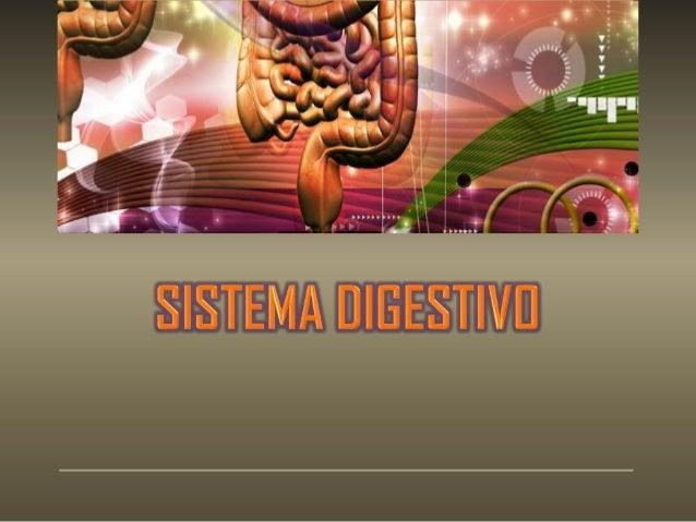 El sistema digestivo es el medio por el cual el cuerpo transforma los alimentos en la energía que necesita para construirs...