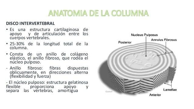 Anatomia y examen clinico de la columna