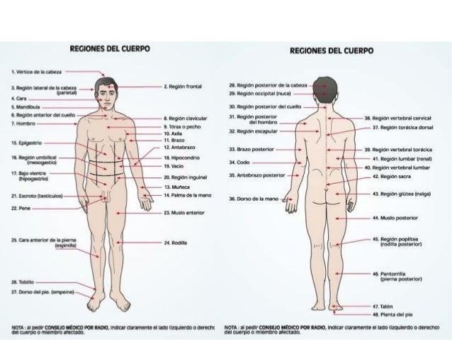 Anatomia y fisiología 01