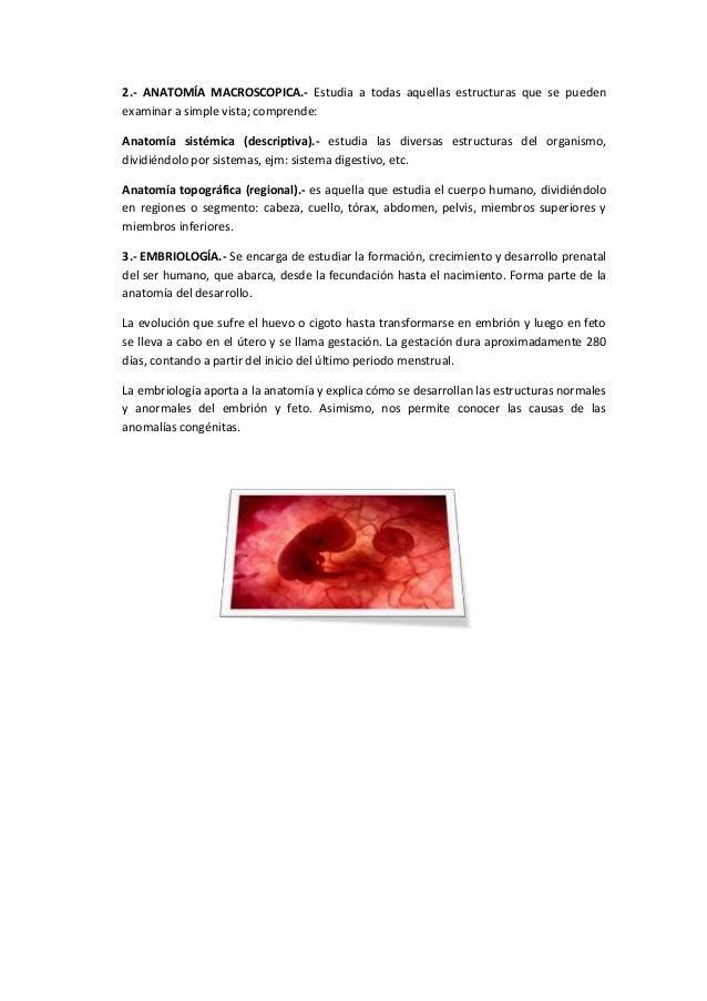 Anatomia y fisiología humana