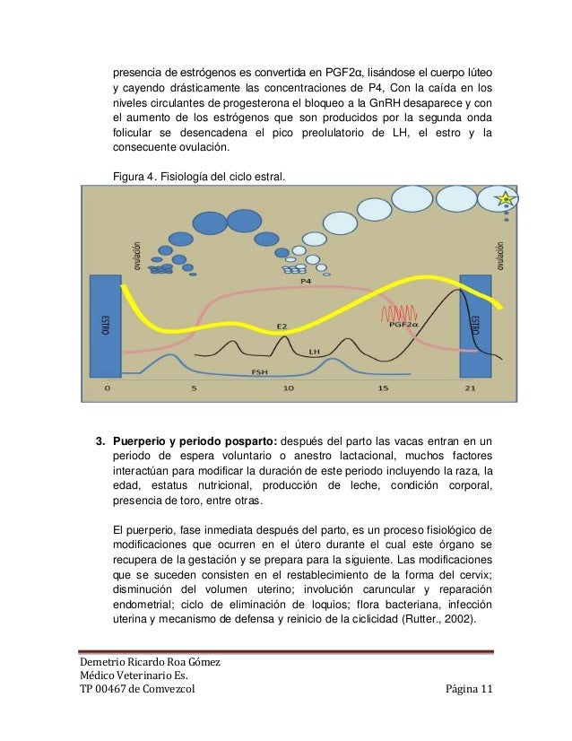 Anatomia y fisiología reproductiva de la hembra bovina