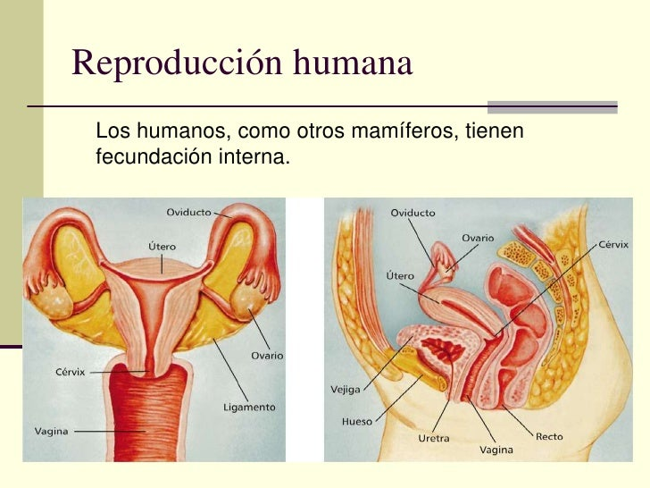 Anatomia y fisiologia.