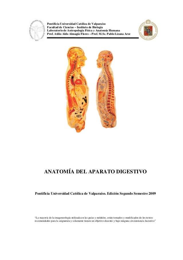 Anatomia y fisiologia aparato digetivo