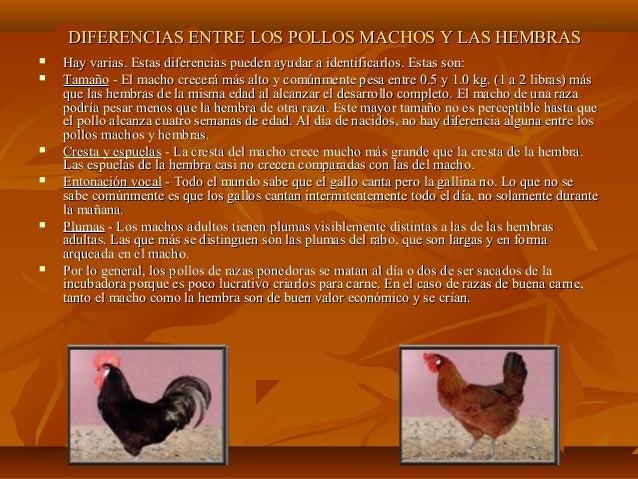 Anatomia y fisiologia aviar