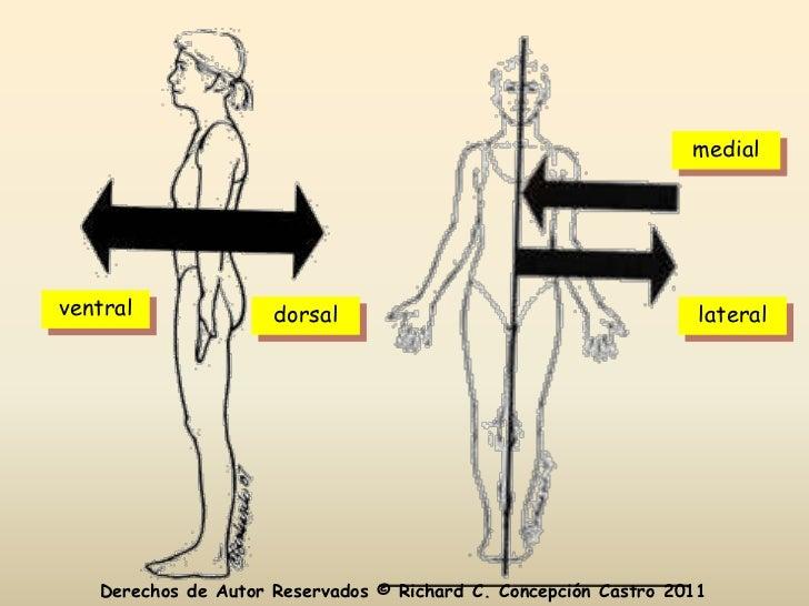 Anatomia y Fisiologia Capitulo 1