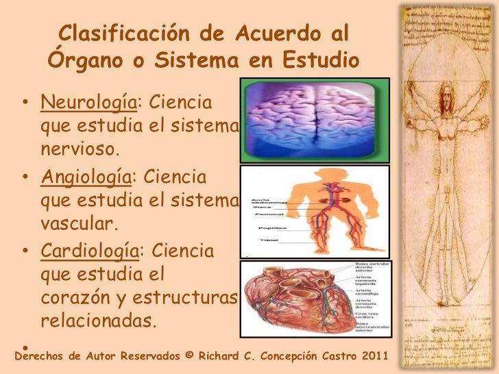Excepcional Anatomía Y Fisiología Capítulo 2 Bosquejo - Anatomía de ...