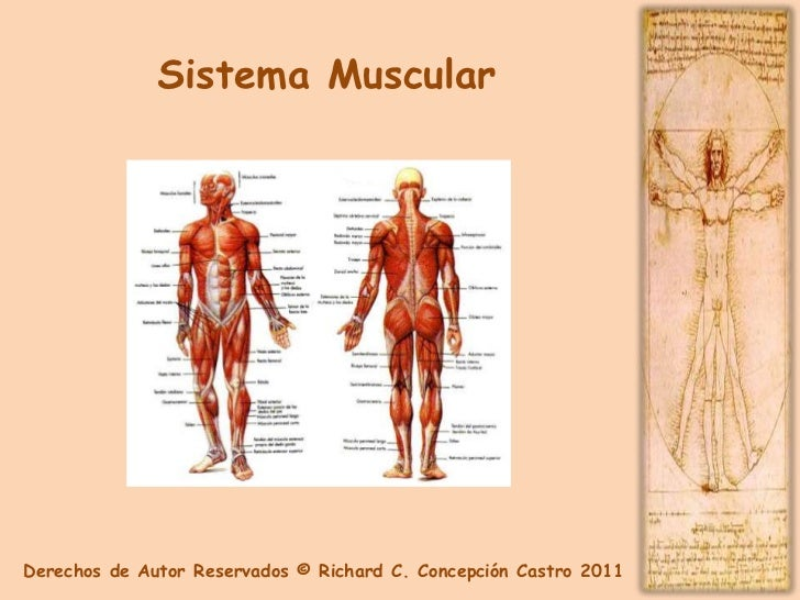 Anatomia y Fisiologia Capitulo 2