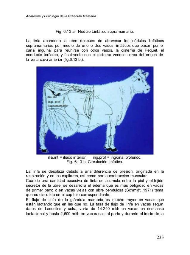 anatomia-y-fisiologia-de-la-glandula-mamaria-17-638.jpg?cb=1355080359