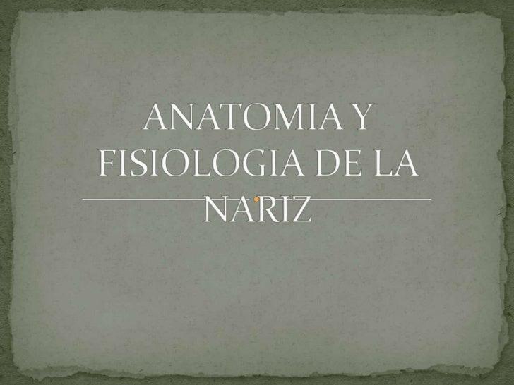 Anatomia y fisiologia de la nariz