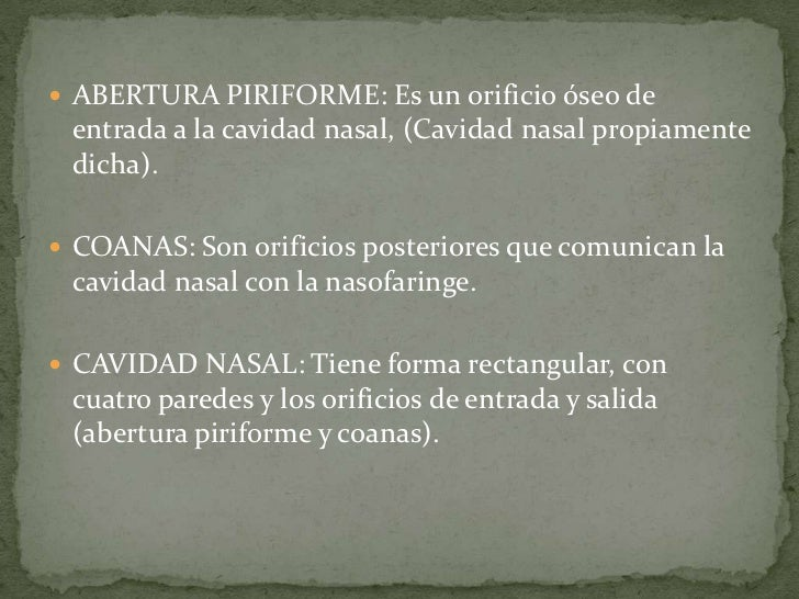 Anatomia y fisiologia de la nariz Slide 3
