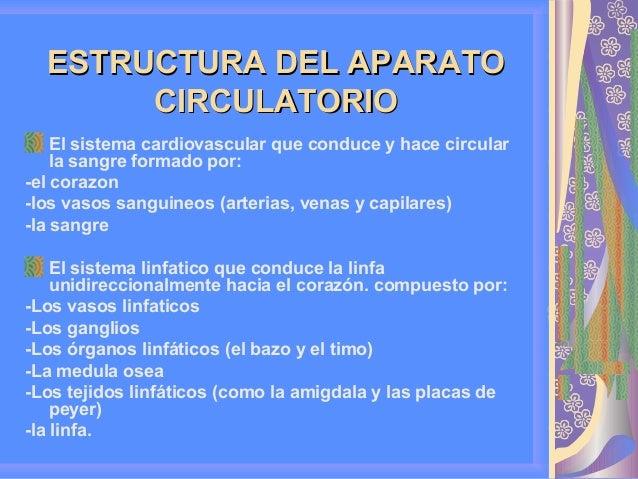 Anatomia y fisiologia del aparato circulatorio