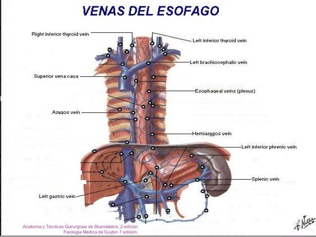 Anatomia y fisiologia del aparato gastrointestinal ok