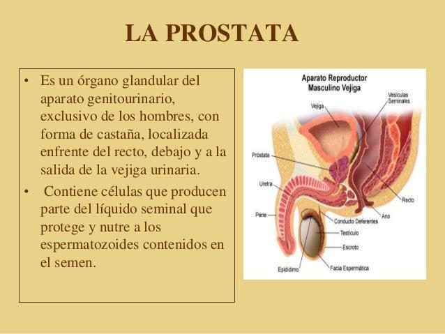 PROSTATA ANATOMIA Y FISIOLOGIA EBOOK