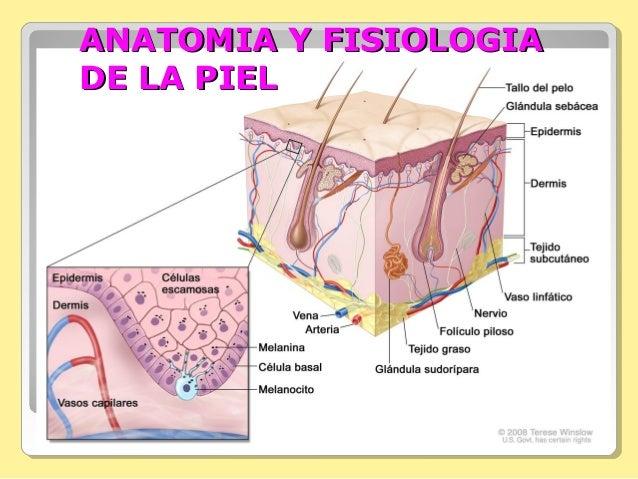 Anatomia y fisiologiadelapiel