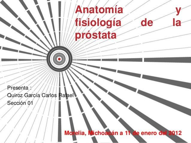 Anatomia y fisiologia de la prostata