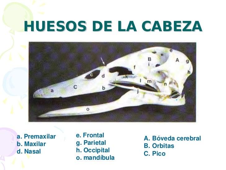 Anatomiayfisiologiadelas de las aves