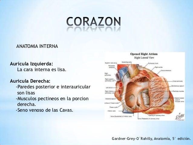 Anatomia y fisiologia del corazón ok
