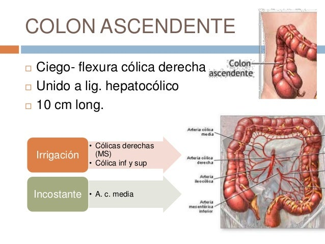 Fisiologia Del Colon Ascendente - Budra