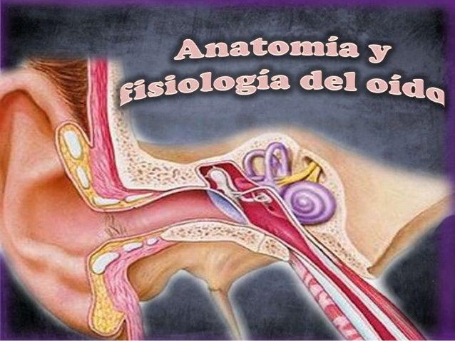 Anatomia y fisiologia del oido