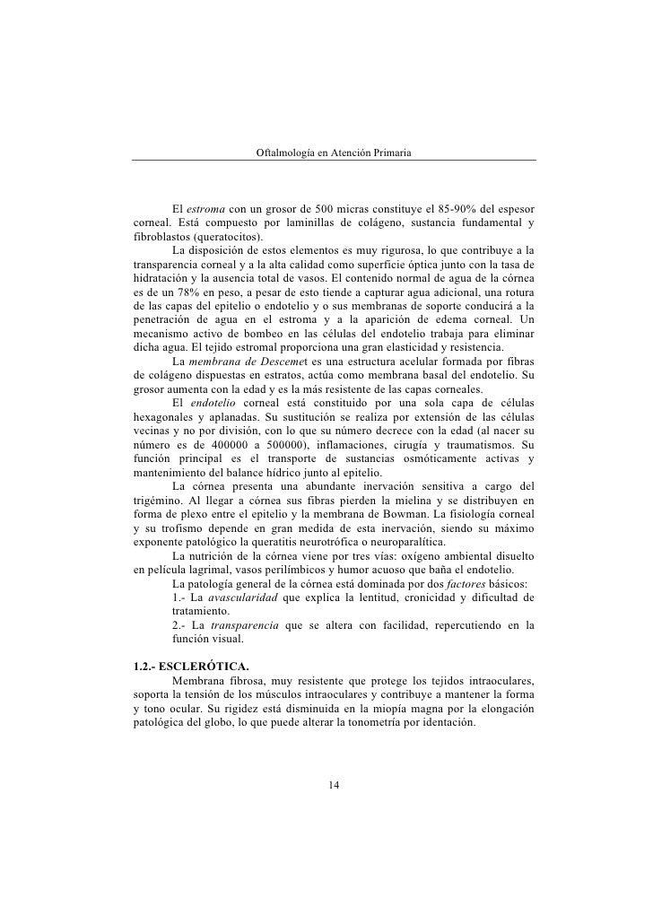 Lujoso Anatomía Y Fisiología De Los Ojos Composición - Imágenes de ...